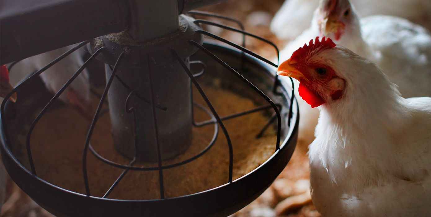 Upgrading the manufacturing of veterinary medicines <br> and supplements for poultry,
